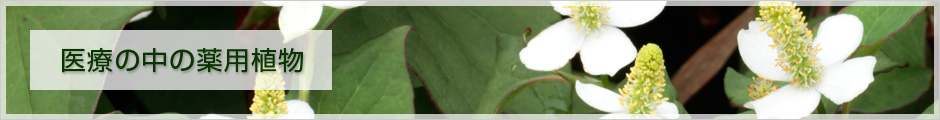 医療の中の薬用植物