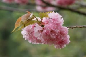 6.桜 第4話