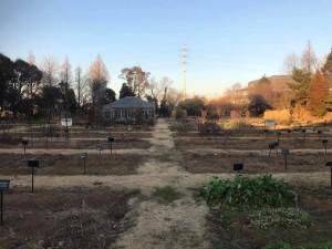 植物園全景Jan05_2019
